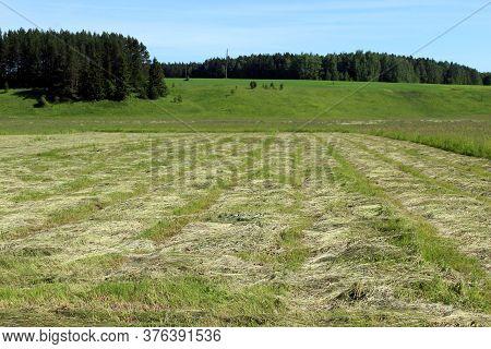 Mowed Field For Harvesting Hay During Haymaking