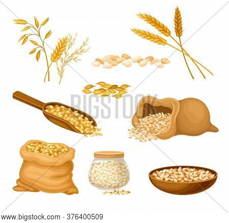 Cereals Or Grain Crops With Dry Seeds In Sack Vector Set