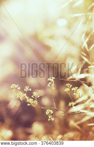 Abstract Natural Background With Green Summer Grass, Backlit, Blurred Image, Shallow Depth Of Field
