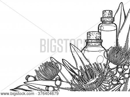 Graphic Essential Oil Bottles Decorated With Eucalyptus Leaves And Flowers