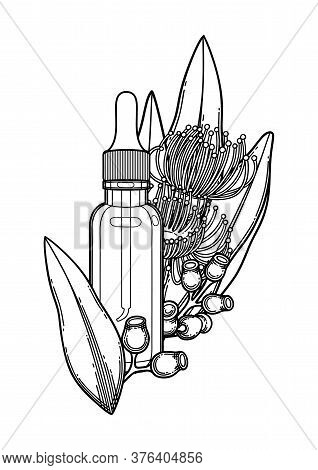 Graphic Essential Oil Bottle Decorated With Eucalyptus Leaves And Flowers