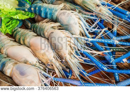 Fresh Tiger Prawns In A Plate With Ice On A Wooden Textured Background Shrimps Or Prawn Raw On Woode