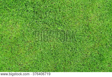 Green Grass Texture Background, Top-down Of Grass Garden Ideal Concept Used For Making Green Floorin