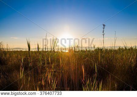 Sunrise Over Grass In Beautiful Ornithological Nature Park Vrana Lake (vransko Jezero) In Dalmatia,