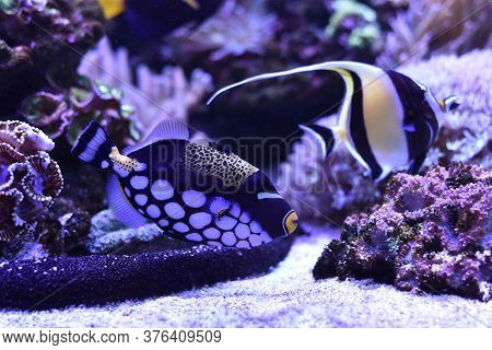 Underwater Scene. / Underwater Photography Of Fish Being Swimming And Marine Life Underwater Ocean.