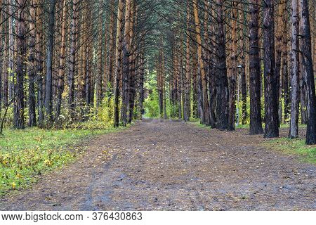 Beautiful Path In The Autumn Forest For Sports. There Are Many Fallen Leaves On The Path. The Concep