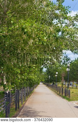 Poplar Tree Growing Along The Paths On The Street. Landscaping City Streets. Planting Of Greenery. B