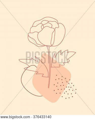 Peony Flower Line Art With Abstract Geometric Shapes On Neutral Background. Modern Digital Drawing.