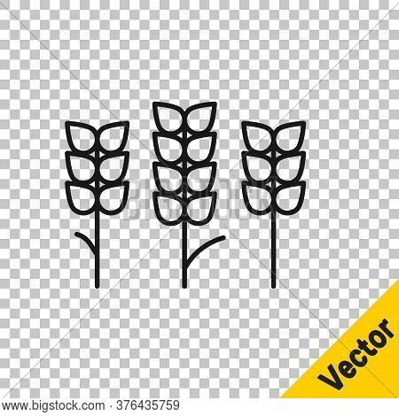 Black Line Cereals Set With Rice, Wheat, Corn, Oats, Rye, Barley Icon Isolated On Transparent Backgr