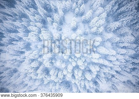 White Trees In Forest Covered With Snow Aerial Top View. Winter Christmas Background. Scenic Winter