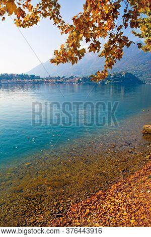Autumn Landscape In Italy. Como Lake In Fall. Deep Blue Waters And Bright Yellow Leaves.