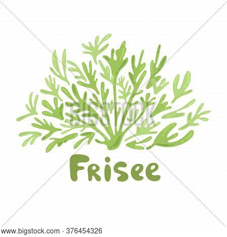 Frisee Lettuce Doodle Icon. Cartoon Frisee Lettuce Illustration. Frisee Cute Salad Simple Design. Sa