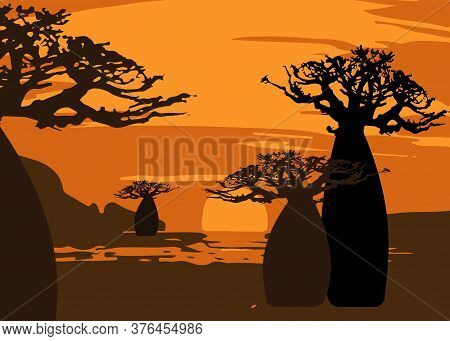 Sunset With Landscape Of Baobab Trees. Forest Of Boab Or Baobab Tree Background. Vector Cartoon Illu