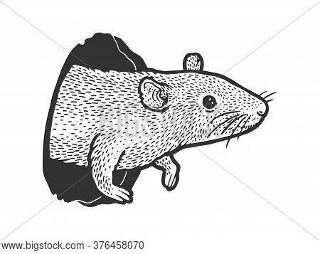 Mouse Rat Peeps Out Of Hole Sketch Engraving Vector Illustration. T-shirt Apparel Print Design. Scra