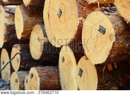 Kyiv, Ukraine - June, 30, 2020: Licensed Legal Timber, Logs With Tags Or Barcodes To Track Timber Wh