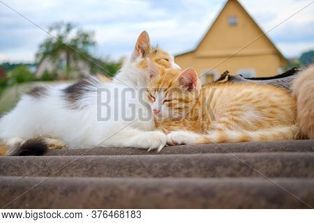 Fluffy Multi-colored Mom Cat Gently Hugs A Red Kitten. A Family Of Cats Sleeps On A Rooftop Outdoors
