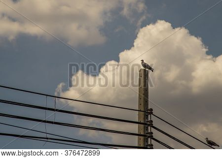 Pigeon Perched On Electric Pole On A Clear Day.