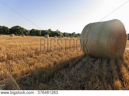 Bales Of Hay. Hay Bales On The Golden Agriculture Field