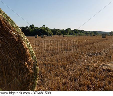 Hay Bale In The Foreground In Rural Field. Bales Of Hay