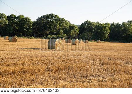 Baled Straw After Harvest. Bales Of Hay