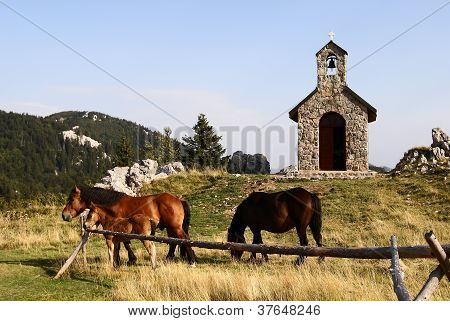 horses grazing on pasture in front of chapel - national park north velebit croatia