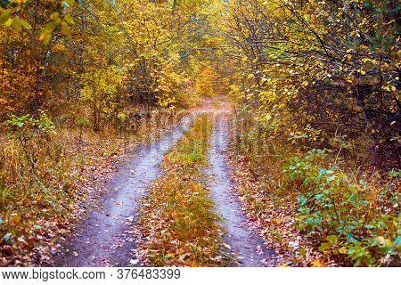 Double Path In Autumn Forest. Non Urban Scene.