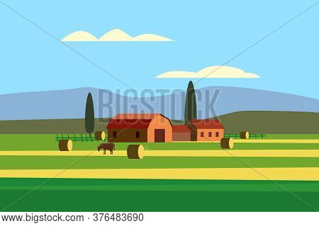 Rural Farm Landscape Field Country House, Cows. Summer Hills Sunset Farmland. Vector Illustration Ve