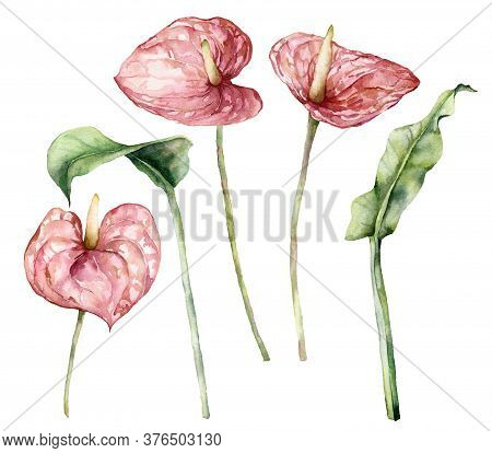 Watercolor Tropic Set With Anthurium And Leaves. Hand Painted Flowers And Stems Isolated On White Ba