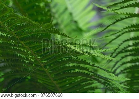 Abstract Emerald Background. Fern Leaves Close-up. Green Fronds. Natural Botanical Wallpaper