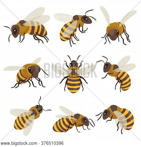 Bees Set. Winged Insect Flying, Sitting, Creeping. Top, Side, Front View. Beekeeping, Honeycraft, Ap