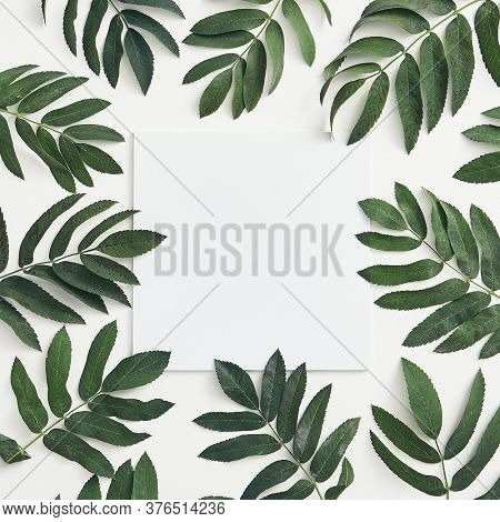Branches leaves top view on white background. Forest sorbus green twigs flat lay. Fall botany concept. Tree branches composition. Botanical social media post, backdrop, wallpaper design