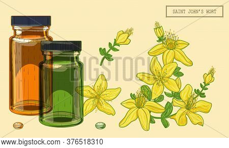 Saint Johns Wort Flowers And Vials, Hand Drawn Botanical Illustration In A Trendy Modern Style
