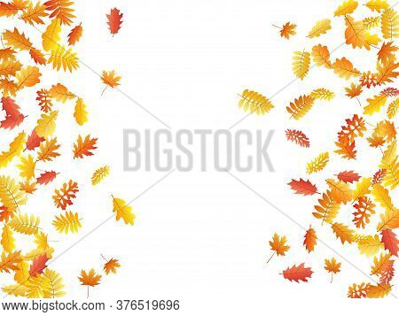 Oak, Maple, Wild Ash Rowan Leaves Vector, Autumn Foliage On White Background. Red Gold Yellow Sorbus