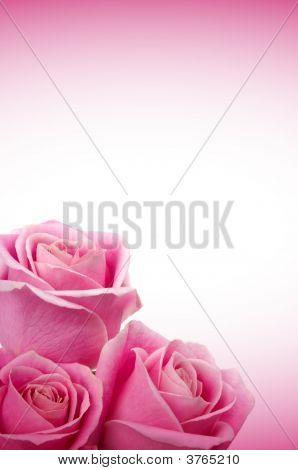 Romantische Roses