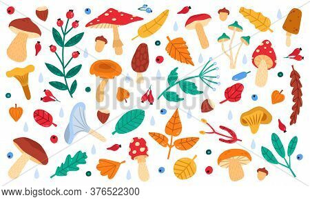 Fall Botanical Decor. Autumn Doodle Forest Leaves, Flowers, Berries And Mushrooms, Botany Fall Seaso