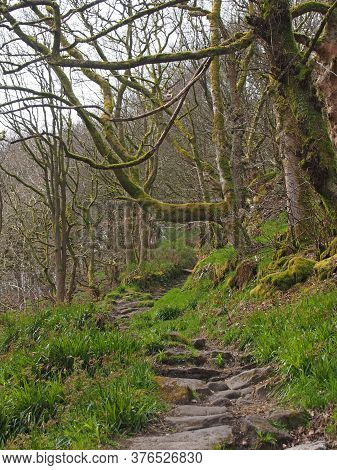 A Woodland Path With Stone Steps Running Up A Hillside Surrounded By Bare Winder Trees Grass And Mos