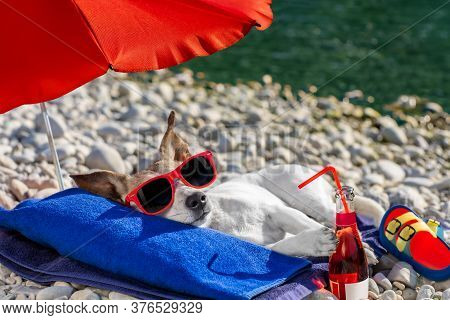 Jack Russel Dog Resting And Relaxing On A Towel Under Umbrella At The Beach Ocean Shore, On Summer V
