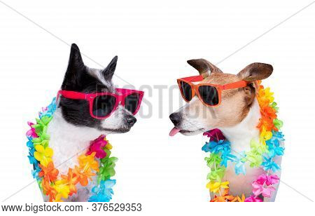 Couple Of Two Dogs Close Together In Love Ready For Honeymoon Isolated On White Backgroud, After The