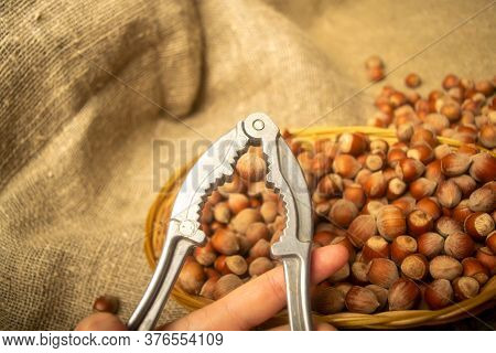 A Girl Is Chopping Hazelnuts With A Nutcracker Against The Background Of A Wicker Basket With Hazeln