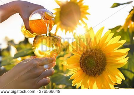 Big Sunflower Flowers In The Sunlight. Yellow Flowers On A Farm Field In Italy. The Concept Of Agric