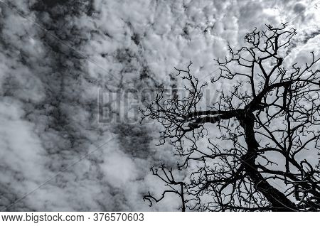 Silhouette Dead Tree On Dark Dramatic Sky And White Clouds. Death, Lament, Sad, Grief, Hopeless, And