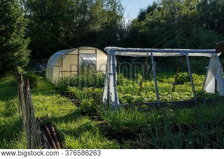 Greenhouse In The Kitchen Garden. Vegetable Garden Next To The Forest In The Evening.