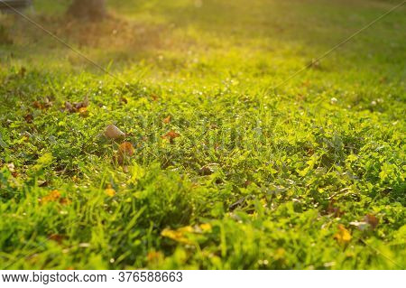 The First Fallen Leaves On A Green Lawn On A Sunny Day. Beginning Of Autumn.