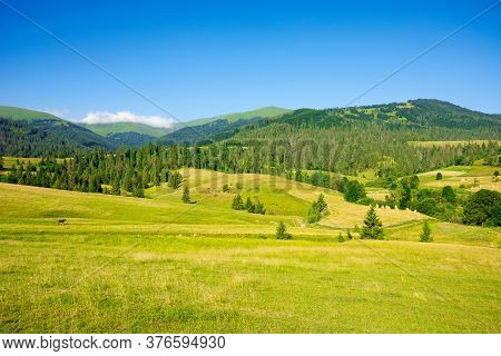 Countryside Landscape In Summer Time. Trees On The Fields And Hills Covered In Green Grass Rolling T