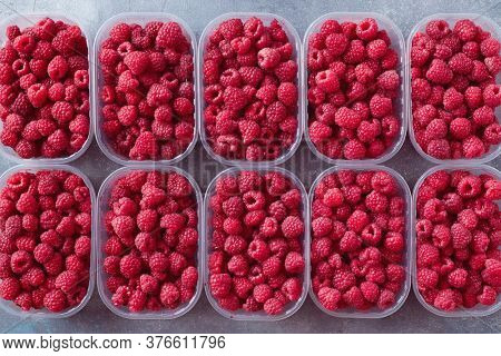 Freshly picked red raspberries in plastic boxes