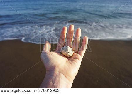 Seashell On A Female Hand On A Seashore Background. A Woman Holds A Seashell On A Background Of Ocea