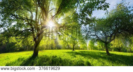 Beautiful Green Rural Landscape In Spring Or Summer, With Trees On A Meadow And The Bright Sun Shini