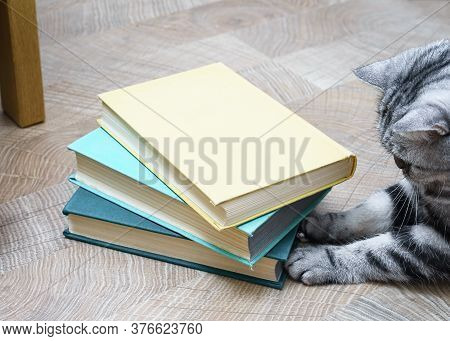 Cute Little Cat With Books On Light Wooden Background