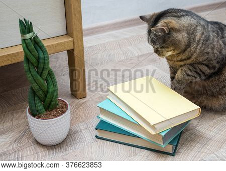 Sansevieria Is Cylindrical In The Shape Of A Pigtail. Books And Cat.