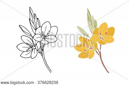 Bloom Floral Spring. Blossom Flower With Leaves On Branch. Black Outline Isolated On White. Natural